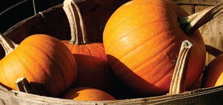 Fall Means Pumpkin GFCF Recipes to Enjoy this Cozy Autumn Season