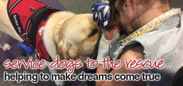 Service Dogs to the Rescue: Helping to Make Dreams Come True